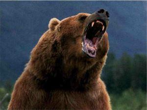 LBF ours fâché