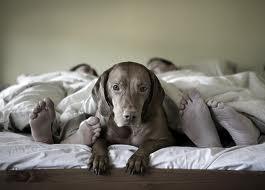LBF chien dans lit