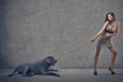LBF chien avec femme